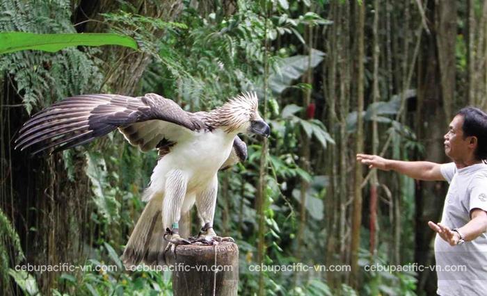 Trung tâm đại bàng Philippines