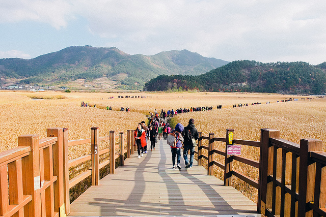 Say mê với nét quyến rũ vịnh Suncheon