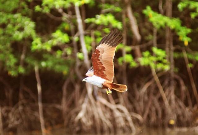 Khám phá công viên sinh thái Kilim tại Langkawi