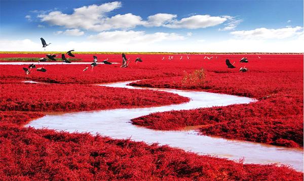 biển đỏ 2