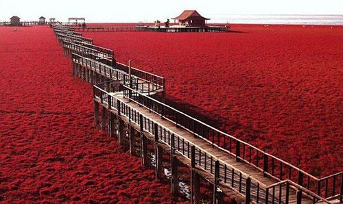 biển đỏ 3