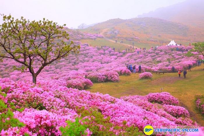 le hoi hoa do quyen Hwangmaesan