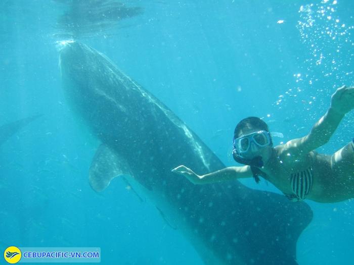 Whaleshark dumaguete