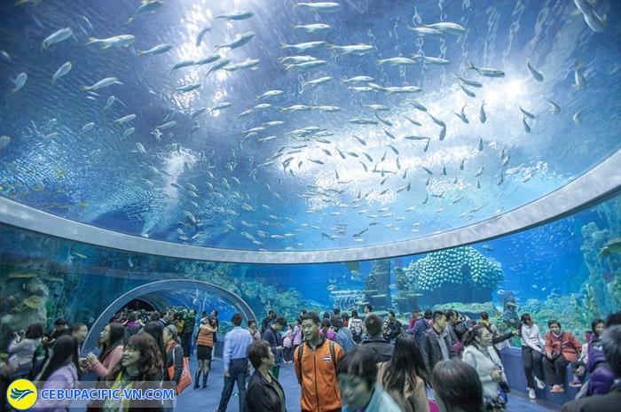 Bảo tàng động vật biển Sydney