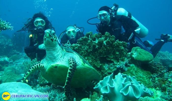 Lặn biển đảo Apo