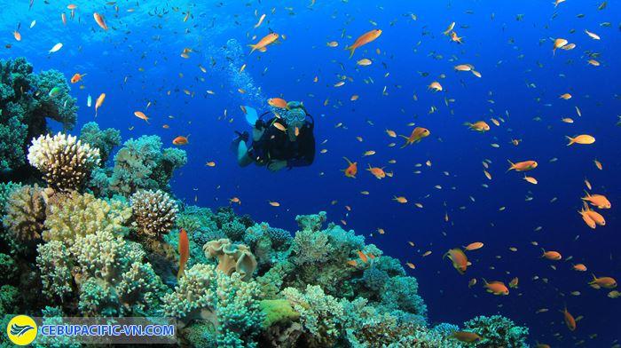 Lặn biển Tubbataha Reef