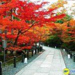 Cây lá đỏ rợp phố Tokio