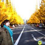 Đại lộ Icho Namiki vào mua thu lá vàng sẽ chuyển thành màu đỏ