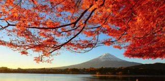 Ngắm nhìn lá đỏ tai Nhật Bản