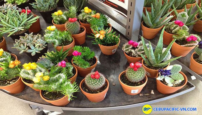 Tham quan công viên Agro Tech với nhiều loại động thực vật khác nhau