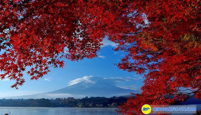 Ngắm rừng lá phong đỏ ở miền Trung, Nhật Bản