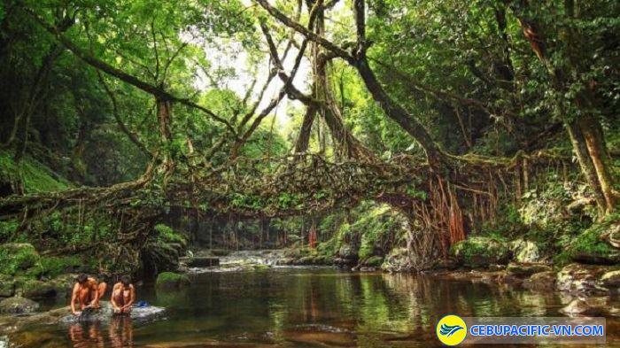 """Cây cầu """"sống"""" tại Cherrapunji"""