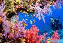 Những địa điểm lặn biển lý tưởng tại Philippines