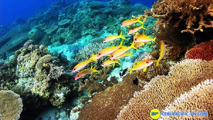 Lặn mình dưới đảo san hô