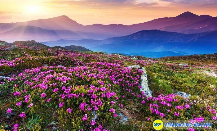 Thung lũng các loài hoa đầy màu sắc
