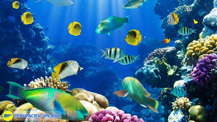 Ngắm các loài san hô các loại cá khác nhau