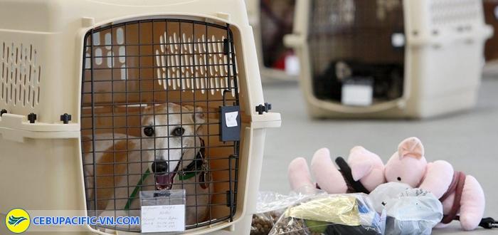 Hành khách cần tự chuẩn bị lồng và giấy tờ cần thiết khi đi máy bay cho thú cưng