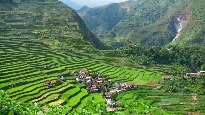 Đến Philippines tháng 3 đến đầu tháng 4 bạn sẽ được chiêm ngưỡng ruộng bậc thang ở Luzon